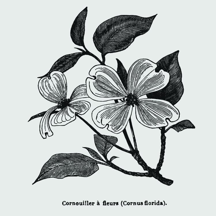 Tatuaje de la flor del cornejo